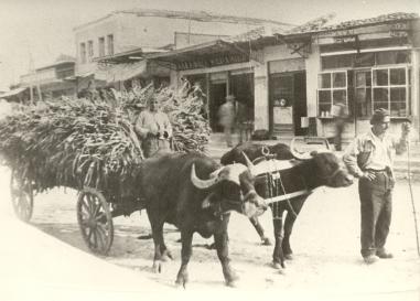 Η ΟΔΟΣ ΜΕΓΑΛΟΥ ΑΛΕΞΑΝΔΡΟΥ 1950-1955